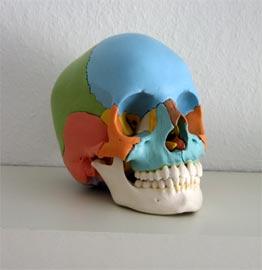Kranio-Sakral systemet består af:  De beskyttende knogler omkring Central Nerve Systemet, nemlig kraniet og rygsøjlen, med korsbenet (sacrum) og halebenet.  Bindevævsmembranerne som omgiver hjernen og rygmarven.  Cerebrospinalvæsken som flyder omkring hjernen og rygmarven, indenfor membranerne.